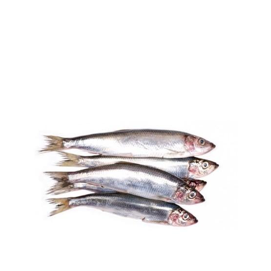 Harengs (séparés) 10kg
